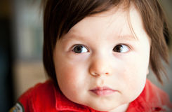 Chubby boy potrait. Portrait of a chubby baby boy Royalty Free Stock Photos