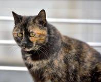 Chubby cat Stock Image