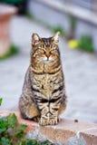 Chubby cat Stock Photos