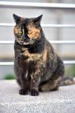 Chubby cat Stock Photo