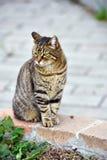 Chubby cat Royalty Free Stock Photos