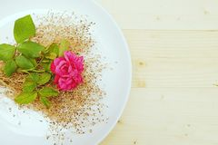 Chubby Pink Rose Flower with Dry Flower on Dish. Close Up Chubby Pink Rose Flower in  Dish On the Table Wood Stock Photo