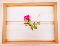 Chubby Pink Rose Flower. In Wooden Box Royalty Free Stock Photography