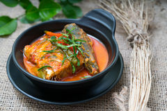 Chuchi鲭鱼泰国食物 库存照片