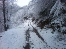 Chuchotement d'hiver Photos libres de droits