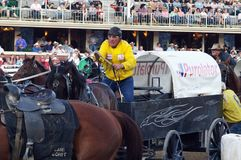 Chuckwagon races at Calgary Stampede. Horses and drivers await the start of the chuckwagon races at Calgary Stampede on July 9, 2013 in Calgary, Alberta Stock Image