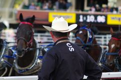 Chuckwagon races at 2013 Calgary Stampede. An official for the Calgary Stampede watches contestants prepare for the chuckwagon races on July 9, 2013 in Calgary Royalty Free Stock Photography