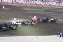 Chuckwagon races start at Calgary Stampede. Horses and drivers start their chuckwagon race at Calgary Stampede on July 9, 2013 in Calgary, Alberta Royalty Free Stock Photos