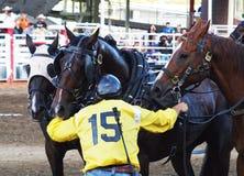 Chuckwagonvoorrijder met paarden royalty-vrije stock afbeelding