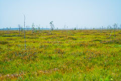 Chudovo swamp Stock Photography