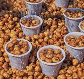 Chufa nuts Irrigated With Water Stock. Spain Royalty Free Stock Photos