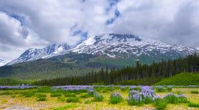 Chugach国家森林在阿拉斯加 免版税库存照片