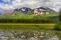 Chugach National Forest in Alaska. One of many scenic views along the Seward Highway in Chugach National Forest in Alaska. The mountains reflect in the pond of stock images