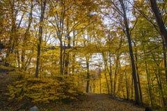 Chujący jesienią obraz stock
