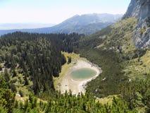Chujący w pięknym halnym lesie część naturalny piękno Durmitor, Jablan jezioro - Fotografia Stock
