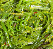 Chuka seaweed salad Royalty Free Stock Photos