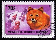 Chukchi驯鹿狗品种和爬犁,大约1978年 免版税库存图片
