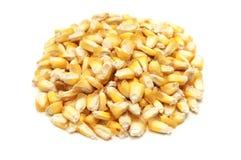 Chulpe di Maiz Immagini Stock