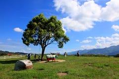 Chulu-Ranch, Taitung, Taiwan stockbilder
