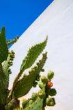 Chumbera nopal prickly pear fruits stock image