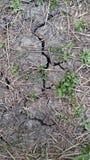 Chun agrietó el árbol húmedo del suelo de arcilla, verde de hierba Foto de archivo libre de regalías