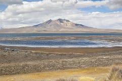 Chungar Lake. Views of Chungara Lake, Lauca National Park, Chile Royalty Free Stock Photos