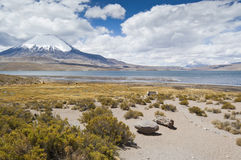 Chungara Lake. Views of Chungara Lake and Parinacota volcano in Lauca National Park, Chile Royalty Free Stock Photography