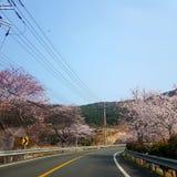 Chungdo Тэгу Корея стоковые фото