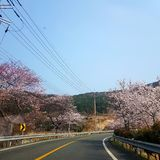 Chungdo daegu korea stock photos