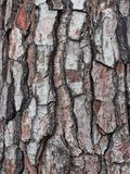 Chunky Cracked e corteccia strutturata sul vecchio albero fotografie stock