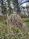 Chupa im grünen Wald stockfotos