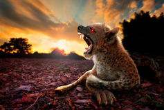 Chupacabra the Legendary Mysterious Creature Royalty Free Stock Photography