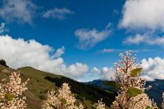 Chuquirahua Blume der Anden schließen oben Lizenzfreie Stockfotografie
