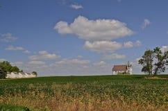 Church in a bean field Stock Photography