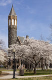 Church Bell Tower and Cherry Blossoms Royalty Free Stock Photography