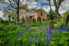 Church with bluebells. St.Peter`s church in Trusthorpe, Lincolnshire in spring with bluebells Stock Photos