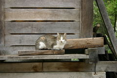 Church cat Stock Image