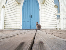 Church cat Royalty Free Stock Photo