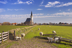 Church of Den Hoorn on Texel island in The Netherlands. The church of Den Hoorn on the island of Texel in The Netherlands on a sunny day. A field with sheep and Royalty Free Stock Photography