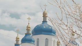Church dome in cherry blossom stock video