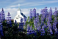 Church in a field of arctic fireweeds Royalty Free Stock Photos