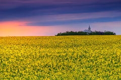 Church and field of rapeseed at sunrise,Transylvania,Romania. Summer landscape with a field of canola at sunset,Transylvania,Romania,Europe Royalty Free Stock Photos