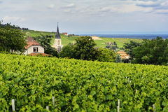 Church of Fleurie village and vineyards, Beaujolais, France Stock Photos