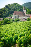 Church and Grape Vine Royalty Free Stock Photos