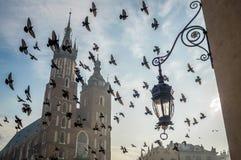 Church on Krakow`s market square with birds, Poland Royalty Free Stock Photos