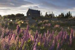 Church and lupines blossom at Lake Tekapo, New Zealand Royalty Free Stock Photography