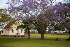 Church Old and Old Jacaranda Tree. An old timber church at Riverview Queensland Australia, surrounded by green grass and an old jacaranda tree Royalty Free Stock Photos