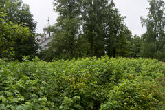 Church. Overgrown garden and Orthodox Church Stock Photography