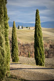 Church between pines, Tuscany (Italy). In the background the small church \Cappella della Madonna di Vitaleta\, Val d\'Orcia (Italy Royalty Free Stock Photo