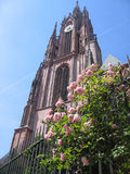 Church and Roses. St. Bartholomeus' Cathedral Church Tower and Roses in Frankfurt, Germany Royalty Free Stock Photography
